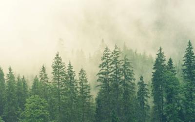 La tecnología IoT para conseguir objetivos medioambientales